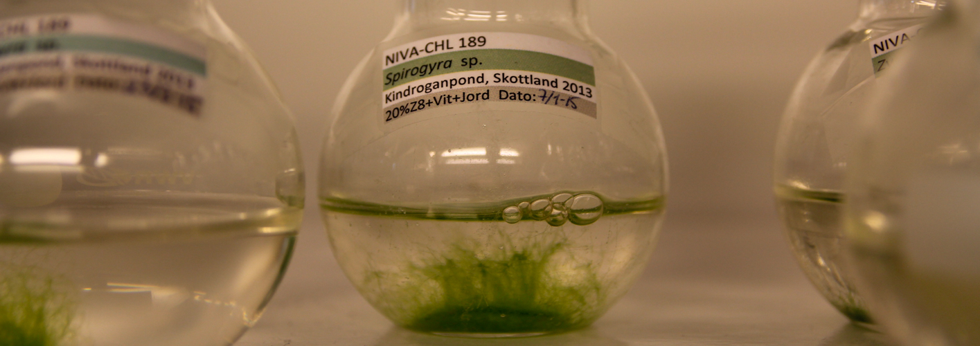 The Norwegian Culture Collection of Algae